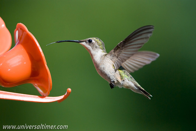 Infra-red Beam Sensor - Hummingbird